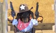Šuo šerifas