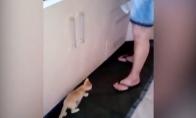 Kačiukas kaip žmoguas kūdikis