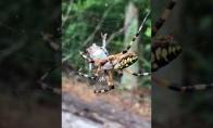 Voras susidoroja su varle