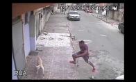 Šuo sumaišo vyrą su medžiu