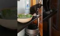 Labai bjaurus katinas