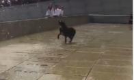 Šuo vaikosi vandens fontaną
