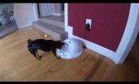 Šuniukui patinka žaisti