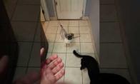 Šunelis užpuola šeimininką su peiliu