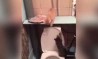 Išsimaudymas tualete