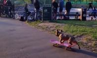 Šuo riedlentininkas
