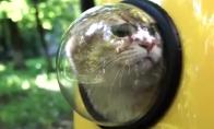 Kuprinė katėms