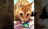 Katė su čiulptuku