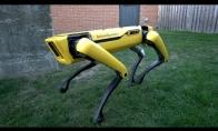 Šuo - robotas