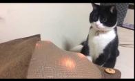 Masažinės pagalvės išgąsdintas katiniukas