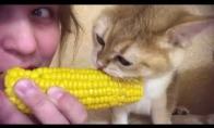 Vakarienė su katiniukais