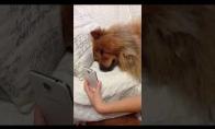 Šunelis ilgisi savo šeimininkės