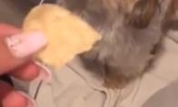 Šuo maisto vagis