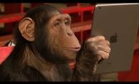 Beždžionės reaguoja į magiją