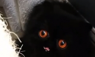 Kačiukas demonas