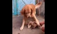 Šuo saugo savo mažylį