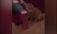 Katė įšoka į vyno maišiuką
