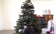 Šuo padeda puošti eglę