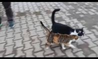 Katė nori sekso