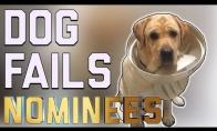 Šunų FAIL rinkinys