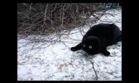 Katinas pirmą kartą pamato sniegą
