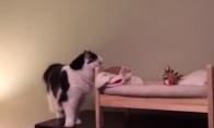 Katė turi nuosavą lovą