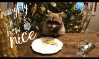Meškėnas pavagia Kalėdų senelio sausainius