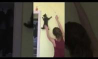 Katė - voras