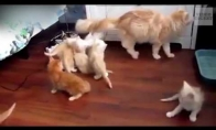 Panikuojančių kačių rinkinys