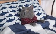 Katinas vienas namuose