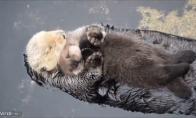 Motina ūdra su vaiku