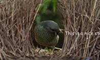 Sekso ištroškęs paukštis