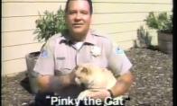 Vargšas katinas