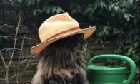 Katė hipsterė