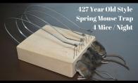 427 metų senumo pelėkautai