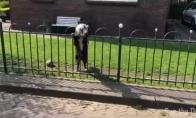 Protingas šuo priverčia su juo žaisti