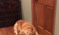 Kai paklausia kiek man šunų reikia