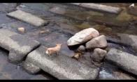Šuo žaidžia su savimi