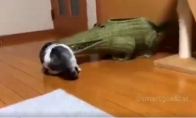 Katė ir krokodilas