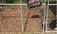 Saugokitės šuns