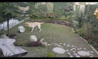 Žaidžiantis šuo
