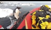 Netikėtas svečias valtyje