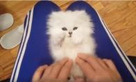 Labai mielas kačiukas
