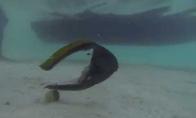 Pusė žuvies plaukioja