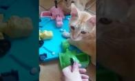 Mėgstamiausias kačių žaidimas