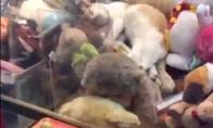 Katė žaidimų automate