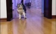 Šeimininkas išduria katę