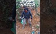 Galiūnai ananasų rinkėjai