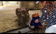 Tigras nori žaisliuko