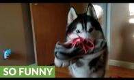 Šuo ginčijasi dėl pavogto bato